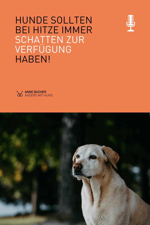 Herausforderung Sommer & Hund - Was du unbedingt beachten solltest