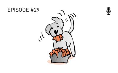 #29 Spiel und Spass mit Hund