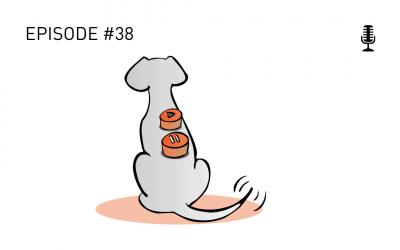 #38 Spielen zwischen Hunden