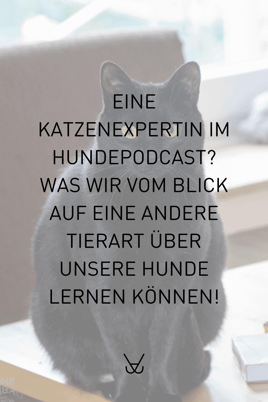 Interview mit Katzenexpertin Christiane Skuza