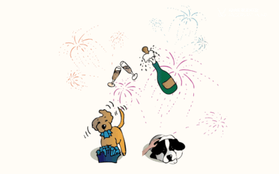 #14 Wie du deinen Hund Silvester unterstützen kannst